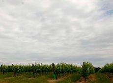 Clube do Vinho Vinícola 2