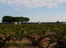 Clube do Vinho Vinícola 3